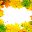 Stock Photo: Fall frame with maple leaves