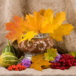 Autumn still life — Stock Photo #1636507