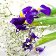 Bouquet on a white background — Stock Photo #1645489
