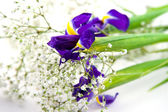 Bouquet on a white background — Stock Photo