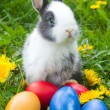 Rabbit and colourful easter eggs — Photo