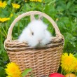 Rabbit and colourful easter eggs — Stock Photo