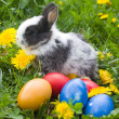 Rabbit and colourful easter eggs in a — Stock Photo #1655236
