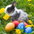 Royalty-Free Stock Photo: Rabbit and colourful easter eggs in a