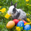 Rabbit and colourful easter eggs in a — Stock Photo #1655239