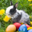Rabbit and colourful easter eggs in a — Stock Photo #1655260