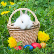 Rabbit and colourful easter eggs in a — Stock Photo #1655265