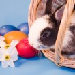 Rabbit and colourful easter eggs — Stock Photo #1655351