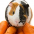 Guinea-pig and carrots — Stock Photo #1655601