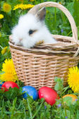 Rabbit and colourful easter eggs in a — Stock Photo