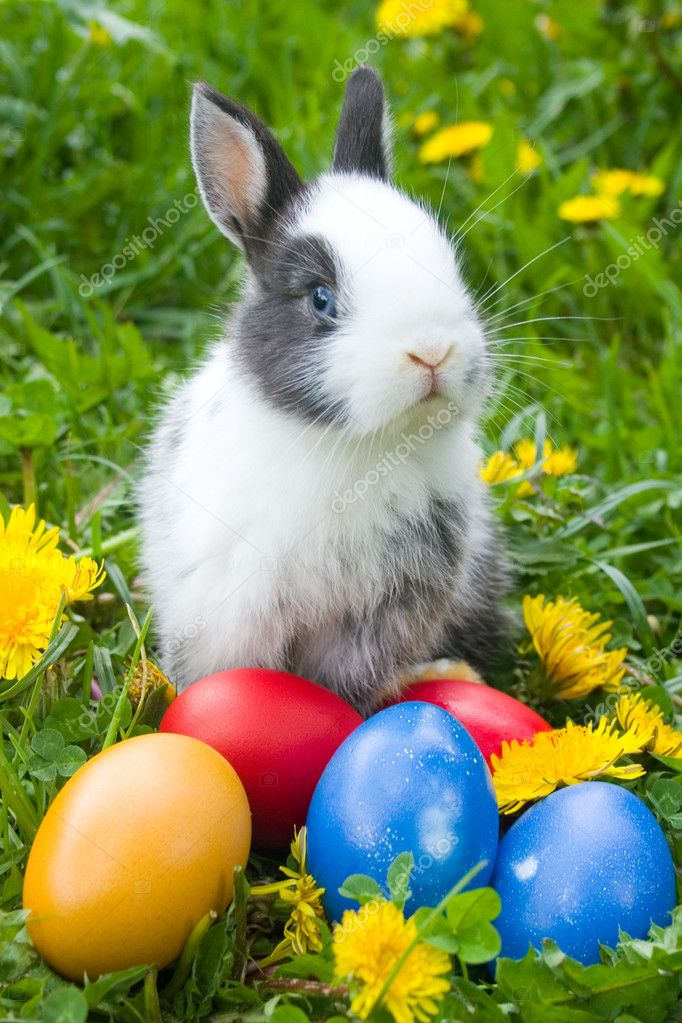 The small rabbit and colourful easter eggs in a grass — Stock Photo #1654957