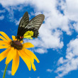 Tropical butterfly and yellow flower — Stock Photo