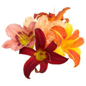 Composition from lilies — Stock Photo