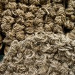 Rope heap texture - Stock Photo