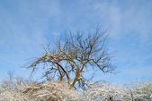 Neve albero coperto — Foto Stock