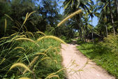 Road in coconut village — Stock Photo