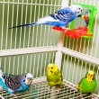 A set of colorful and exotic tropical parakeets. — Stock Photo #1702495