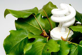Gloeilamp ingegoten plant — Stockfoto