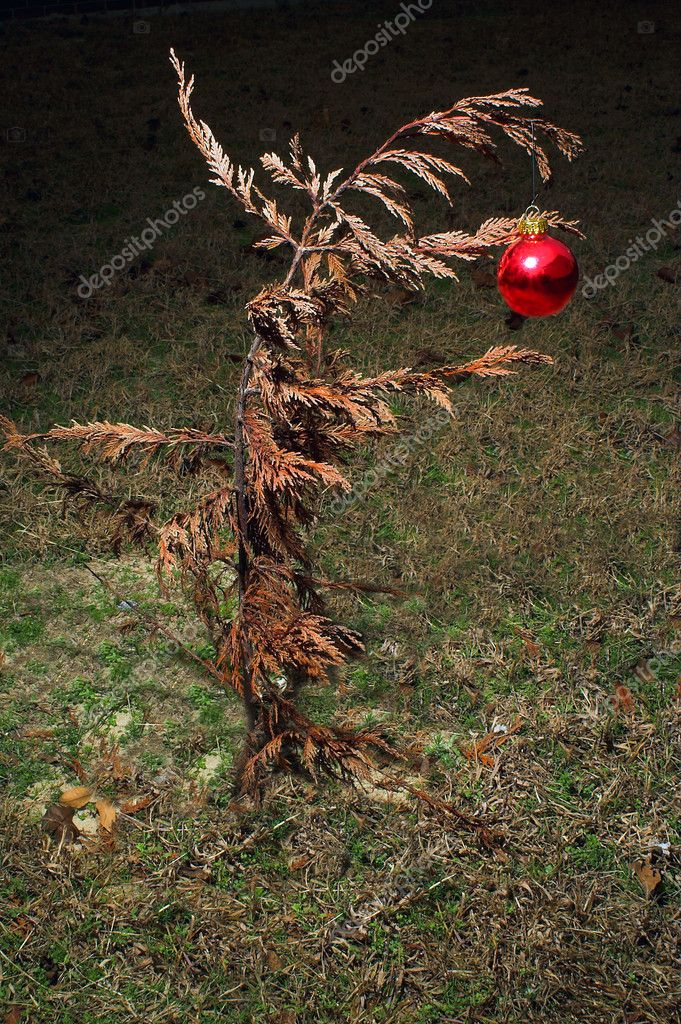 A Christmas ornament on a dead tree. — Stock Photo #1914293