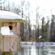 A Birdhouse in the Snow - Stock Photo