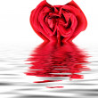 Red Rose Heart — Stock Photo