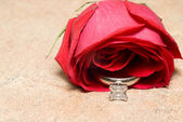 Wedding Ring in a Rose — Stock Photo