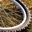 Stock Photo: Bicycle Tire