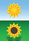 Sun and sunflower — Stock Vector