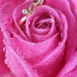 Close up of gold ring in pink rose — Stock Photo #1710874