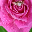 Close up of gold ring in pink rose - Stock Photo