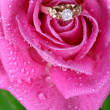 Close up of gold ring in pink rose — Stock Photo