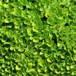 Green carpet — Stock Photo