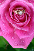Close-up do anel de ouro em rosa — Fotografia Stock