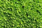 Tapete verde — Fotografia Stock