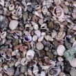 Seashells - Stock Photo