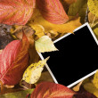 Blank photo between autumn leaves — Stock Photo
