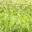 Meadow — Stock Photo #1764373