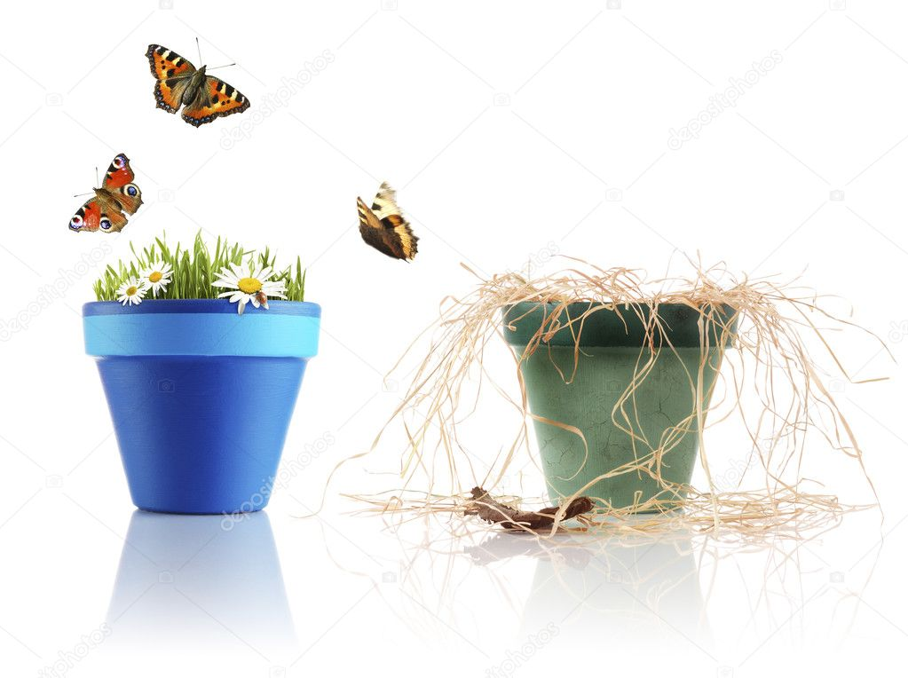 One pot has dead plant, while another is healthy — Stock Photo #1765976
