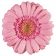 Royalty-Free Stock Photo: Pink gerbera
