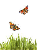Butterflies under grass — Stockfoto