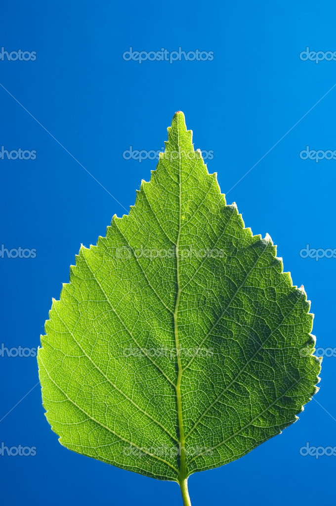 Green leaf with sky in the background — Stock Photo #1819144