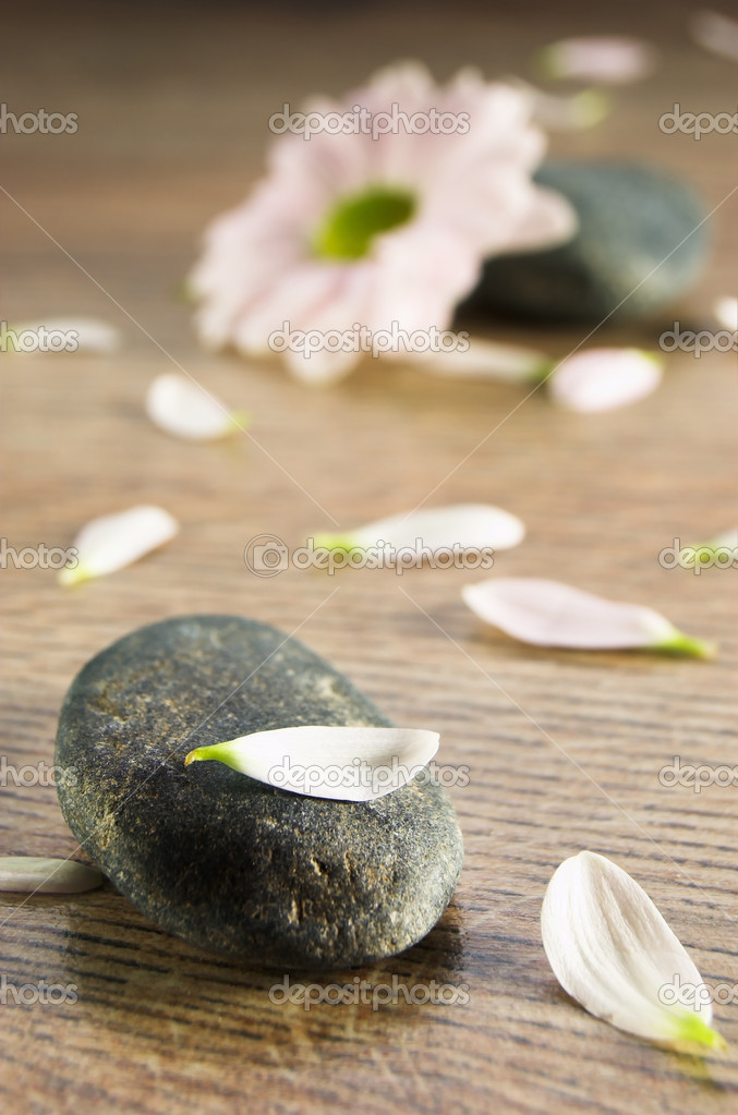 Stone with petals and flower — Stock Photo #1819240
