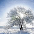 Sky, tree and snow - Stock Photo