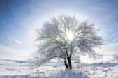 Himmel, träd och snö — Stockfoto