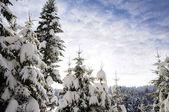 Cielo, albero e neve — Foto Stock