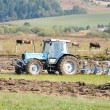 Tractor on field and cows behind — Stock Photo
