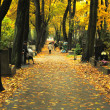 Foto Stock: Walk in autumn