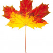 Autumn leaf  isolated — Stock Photo