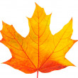 Stock Photo: Autumn leaf isolated