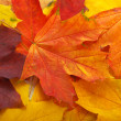 Royalty-Free Stock Photo: Background made of autumn leaves